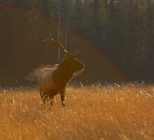 Rainbow Elk by JamesA1