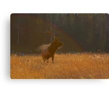 Rainbow Elk Canvas Print