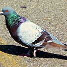 A pigeon named Orton by Scott Mitchell