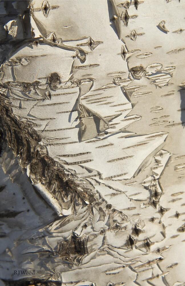 Birch cu by Rod J Wood