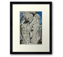 Well Weathered Birch Framed Print