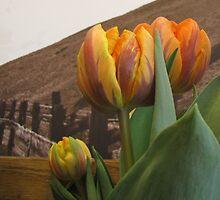 Grocery Store Tulip by trueblvr