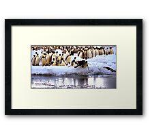 Emperor Penguins Going Fishing Framed Print