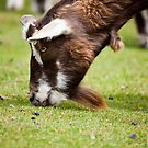Goat by Ray Clarke