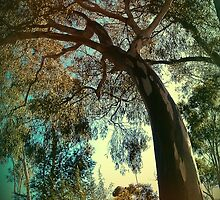 Fairfield Gumtree by Niki na Meadhra
