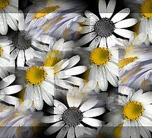 Crazy Daisys by Karen Lewis