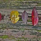 Forest Leaves 2 by Leonie Mac Lean