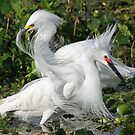 birds of florida by jozi1