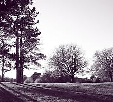 a view of the park - black and white by natmic