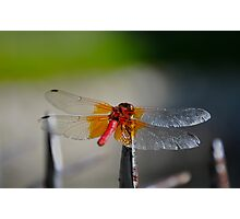 Gossamer Wings Photographic Print