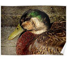 Avian Colors Poster