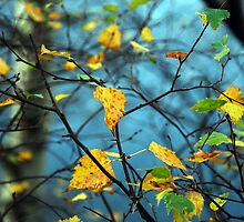 Lake District Autumn Leaves by a h