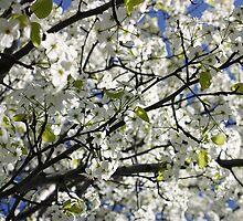 Flowering Tree by Chris  Bradshaw