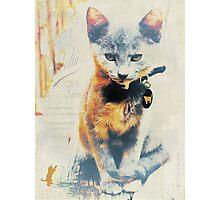 French Kitten Photographic Print