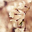 Weeping Cherry by EkaterinaLa