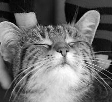Cat with no hat by Tony Jones