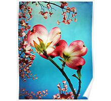 Blooms of the Dogwood Poster