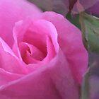 Pink Rose by Kelly Cavanaugh