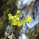 Spring Renewal by Quinn Blackburn