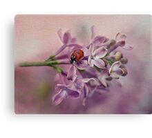 Ladybird on purple lilacs Canvas Print