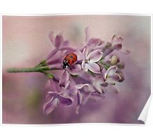 Ladybird on purple lilacs Poster