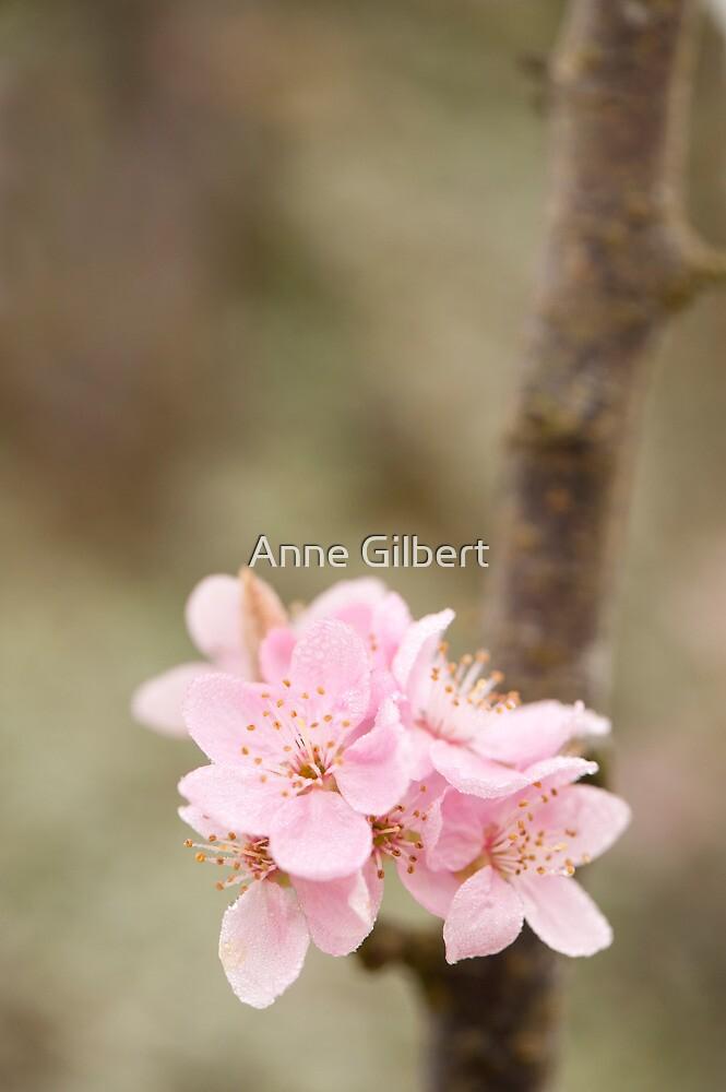 Prunus cerasifera 'Lindsayae' by Anne Gilbert