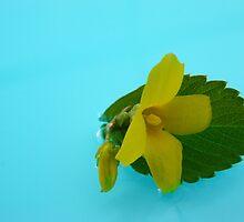 floating flower by JGull