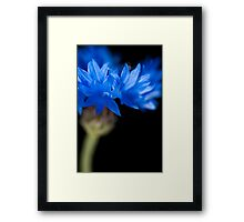 Sunkissed Cornflower Framed Print