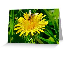 Hover-fly on dandelion Greeting Card