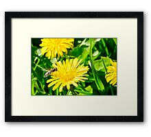 Dandelion and insect Framed Print