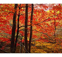 THE FOREST AUTUMN Photographic Print