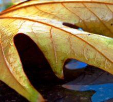 Fallen Leaf Sticker