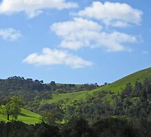 oak hillsides of Sunol wilderness- California by David Chesluk