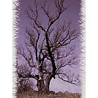 Silent tree iphone case by DreamCatcher/ Kyrah Barbette L Hale