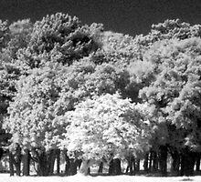 Phoenix Park Trees In Infra-Red by Dave  Kennedy
