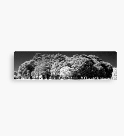 Phoenix Park Trees In Infra-Red Canvas Print
