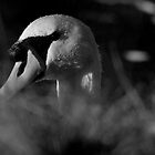 Hello Swan by Dave  Kennedy