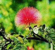 Pink Flower. by Beth Mackelden