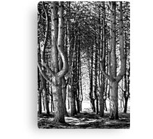 Tall Trees At The Furry Glen, Phoenix Park Canvas Print