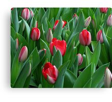 Red Among the Green Canvas Print