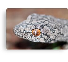 Southern Spiny-tailed Gecko - Portrait Canvas Print