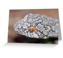 Southern Spiny-tailed Gecko - Portrait Greeting Card