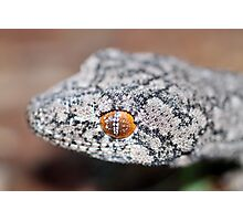 Southern Spiny-tailed Gecko - Portrait Photographic Print