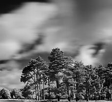 Infra-Red Phoenix Park by Dave  Kennedy