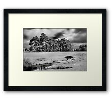 Bridge and Trees in The Phoenix Park Framed Print