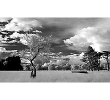 The Phoenix Park in Infra-Red Photographic Print