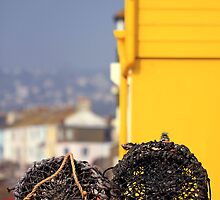 Lobster pots in Teignmouth by whimsicalworks