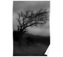 Comeragh Mountains - Misty Tree Poster