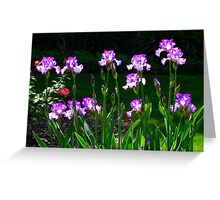 Irises In The Morning Sun Greeting Card