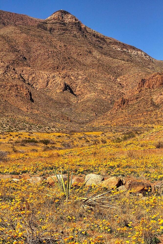 El Paso's Annual Poppy Display by Ray Chiarello